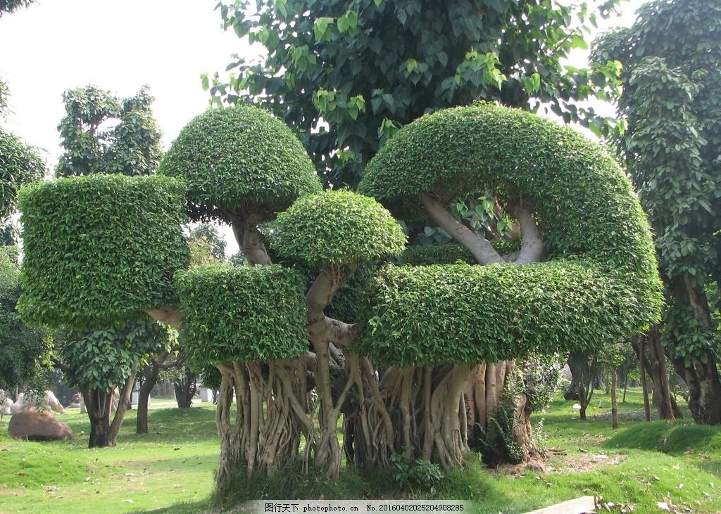 植物艺术 树艺 园林 植物 公园 树形 盆景 造型 摄影 生物世界 树木