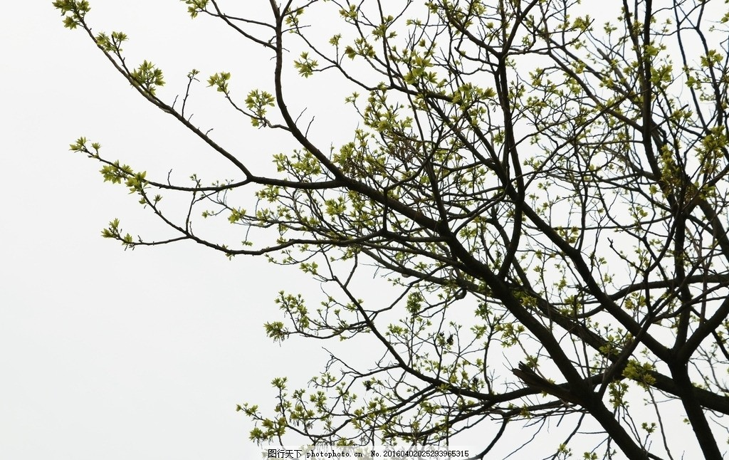 树苗 树木 绿叶 幼苗 摄像 摄影