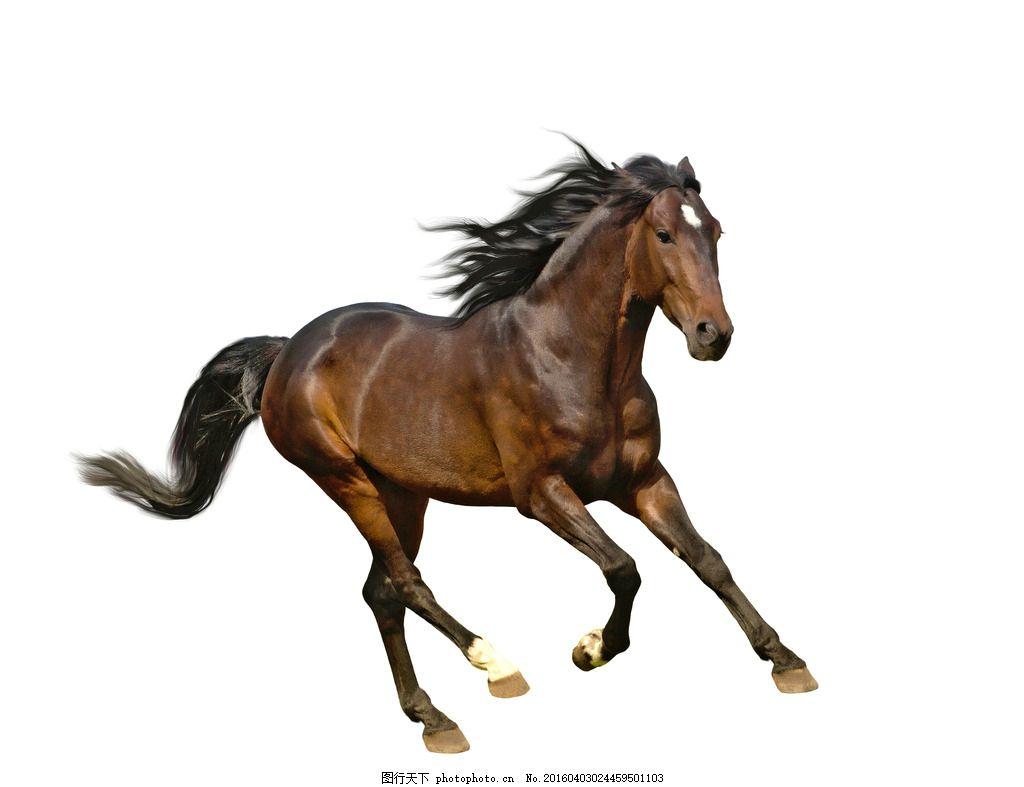 可爱野马 唯美 可爱 动物 马 野马 千里马 小马驹 骏马 摄影 生物世界