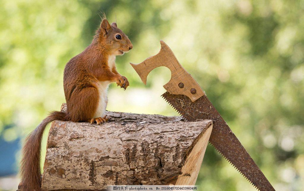 松鼠锯木头 剧 动物 摄影