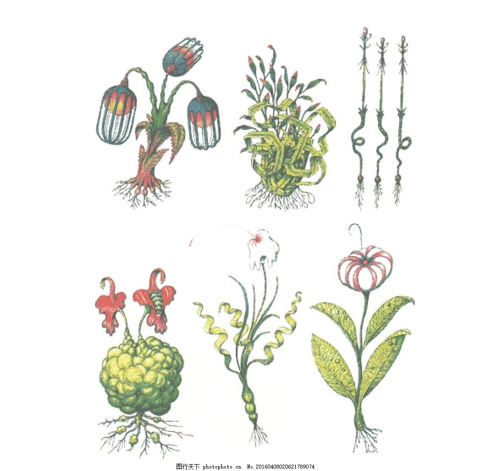 奇妙植物 植物 彩色 元素 彩铅 ai 矢量 花卉 花卉素材 抽象 设计