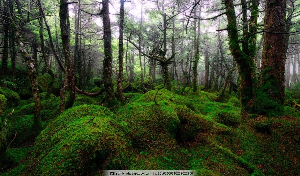 绿色森林 摄影 照片 景色 风景 苔藓 树木 自然景观 自然风景