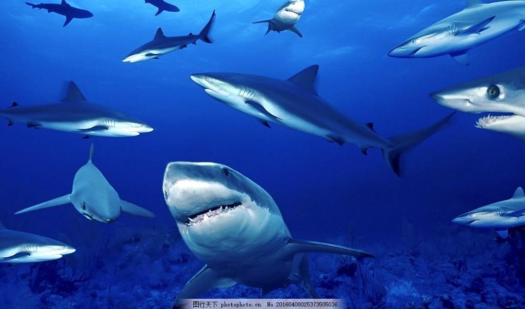 海底鲨鱼 摄影 照片 景色 风景 海水