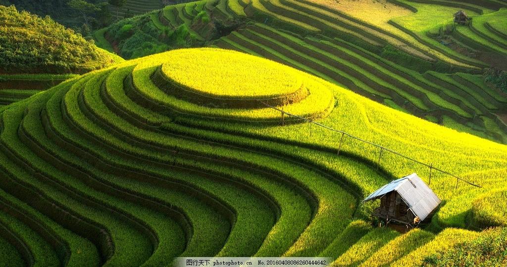 绿色梯田 摄影 素材 照片 景色 风景 梯田 绿色 稻谷 摄影 自然景观