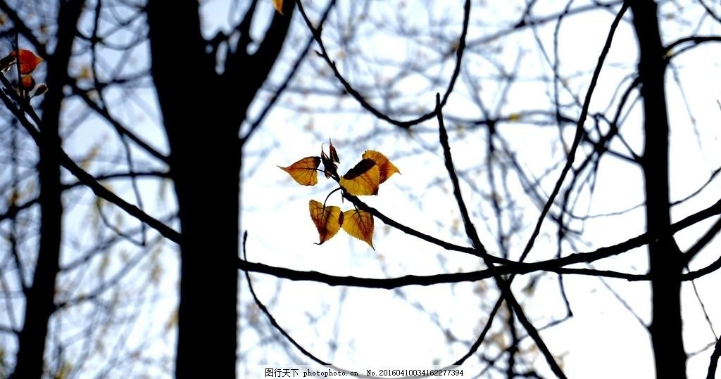一叶知秋 秋天 叶子 摄影 壁纸 手机壁纸 摄影 摄影 自然景观 自然