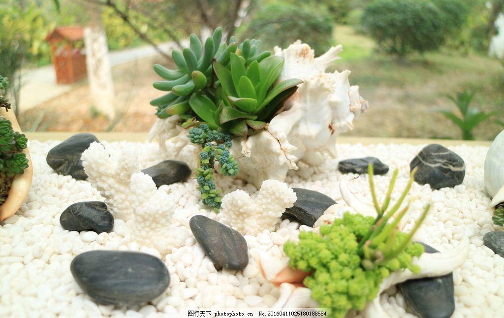 多肉植物 盆栽 盆景 花瓶 瓶子 静物 摄影图片