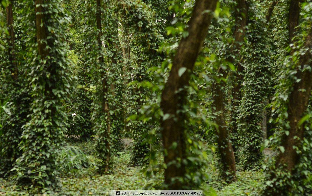 树木 树叶 摄影图片 摄影 自然景观 自然风景 素材 老树 热带雨林