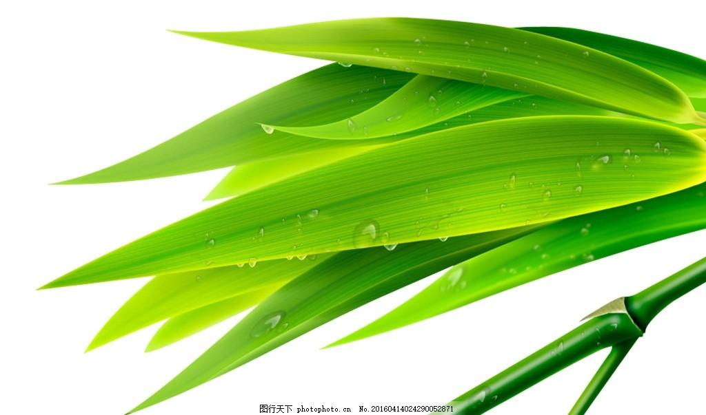 绿色竹叶手绘图片