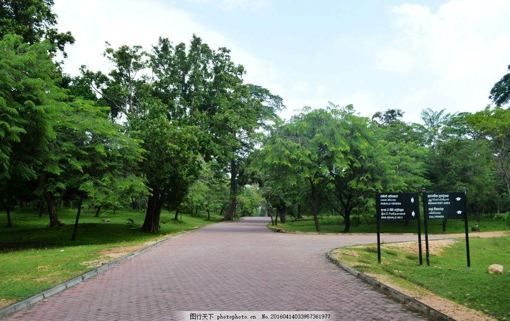公园 道路 大树 树木 绿化 氧吧 摄影 摄影 旅游摄影 国外旅游 300dpi