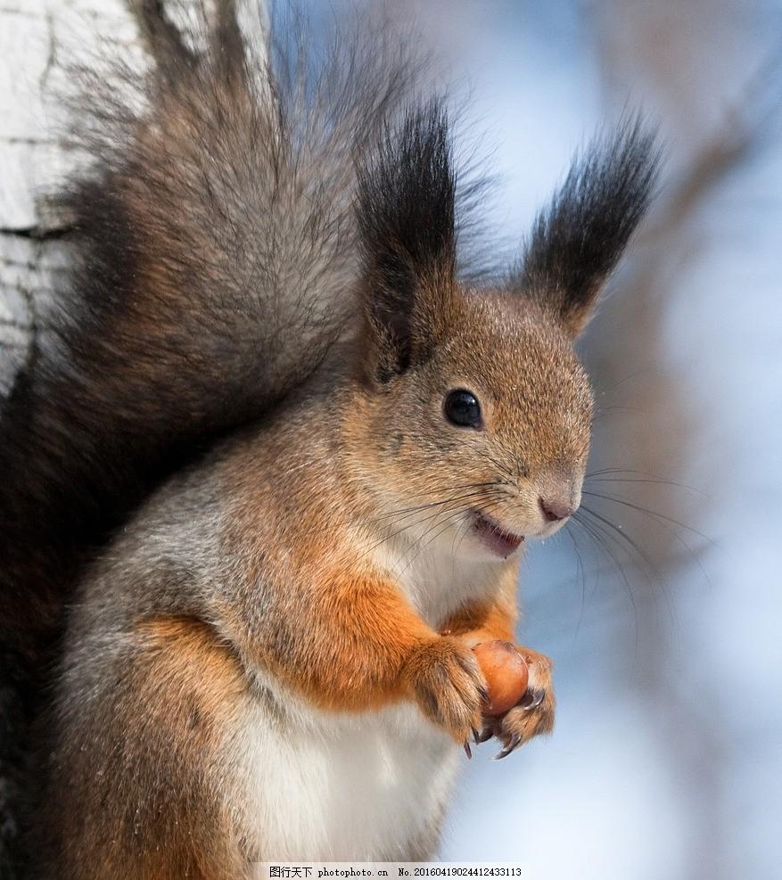 松鼠 动物 唯美 动物世界 小松鼠 动物摄影