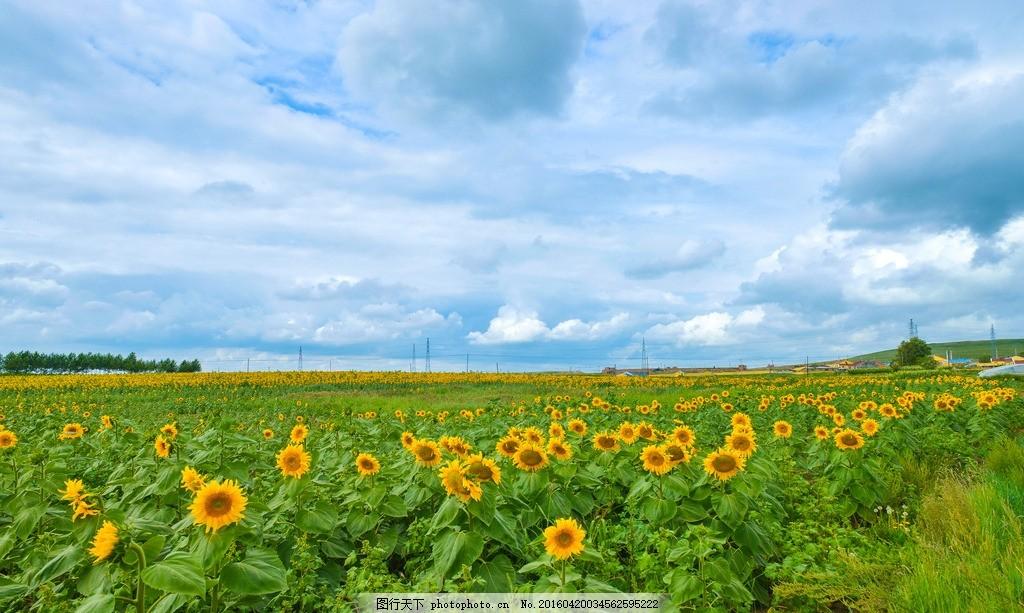 绿色 景色 清新 田园风光 田园风景 野外 郊外 自然景观 山水风景图