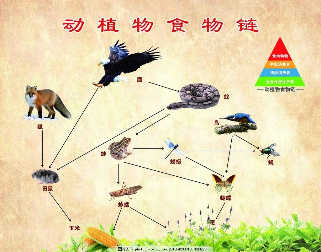 动植物食物链