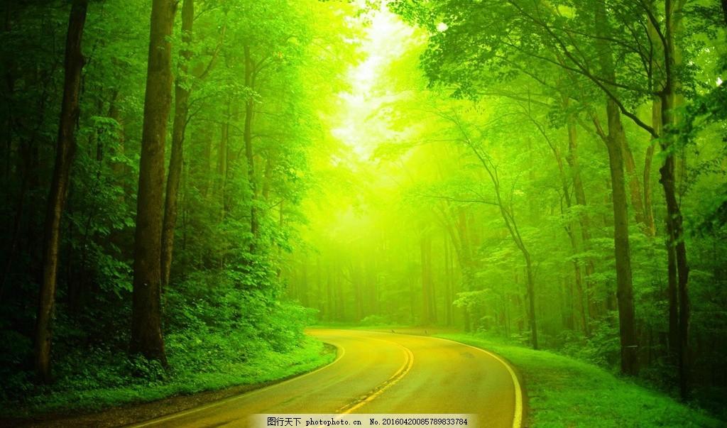 林荫道路 林荫大道 公路 晨光 阳光 树林 自然风景 摄影 自然景观