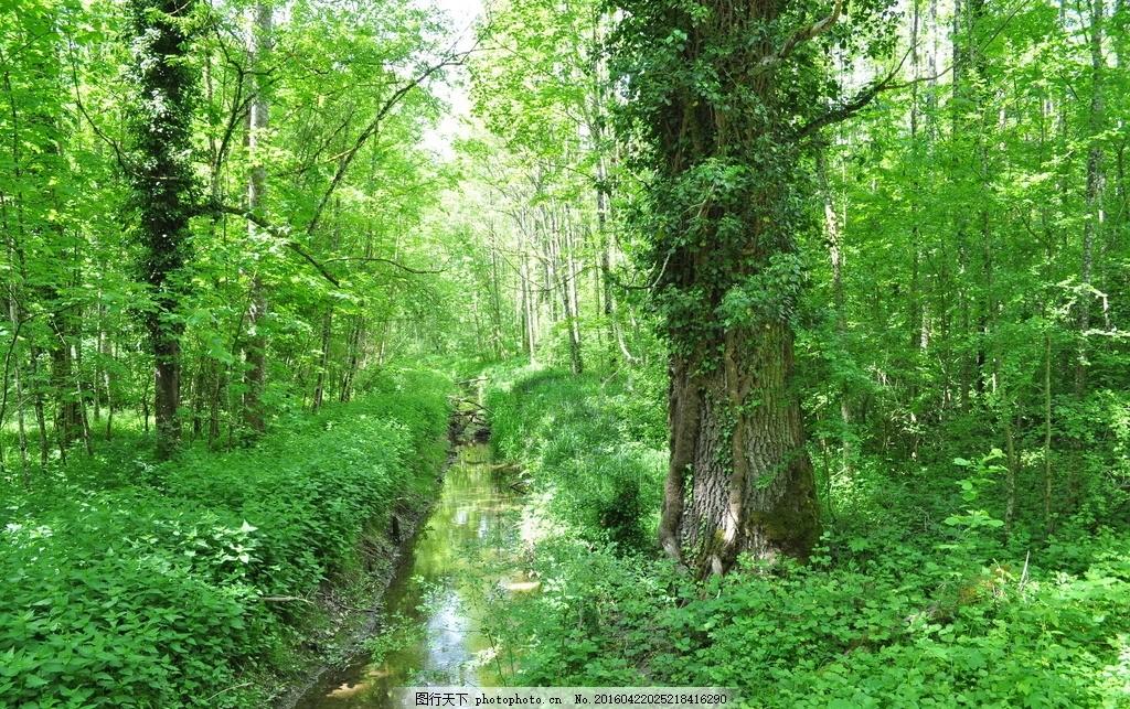 春天绿色森林 春天 绿色森林 树木 树林 森林 春天树林 绿色 大树