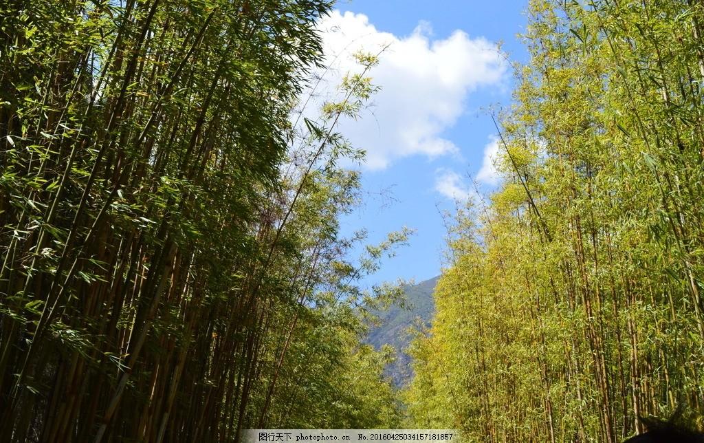 竹子和蓝天 蓝天 风景 竹子 舒适 自然 摄影 自然景观 自然风景 300