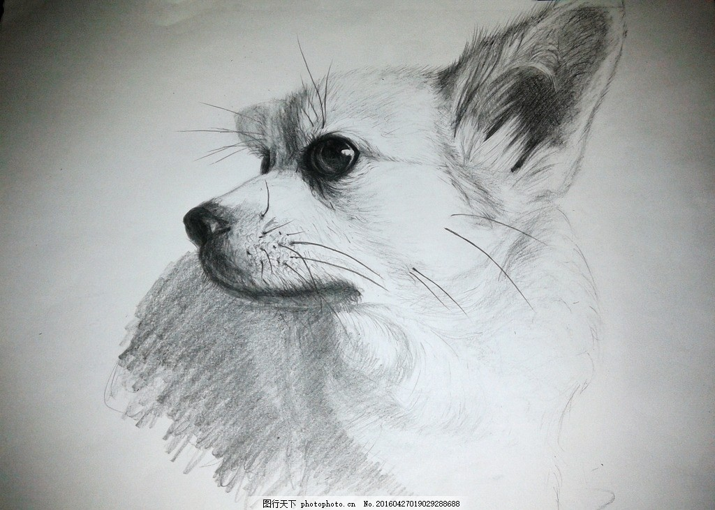 素描宠物 素描 宠物 狗 铅笔画 绘画 绘画 涂鸦 设计 文化艺术 绘画
