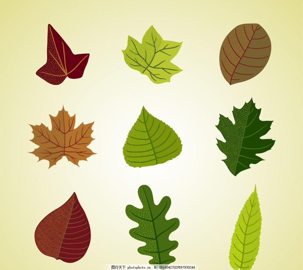 彩色树叶 彩色叶子 彩色 叶子 树叶 枝叶 彩色纹理 叶 平面素材 设计图片