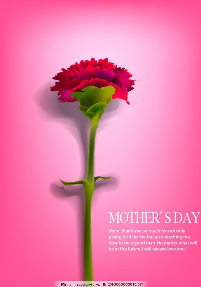 母亲节海报 康乃馨花朵 鲜花