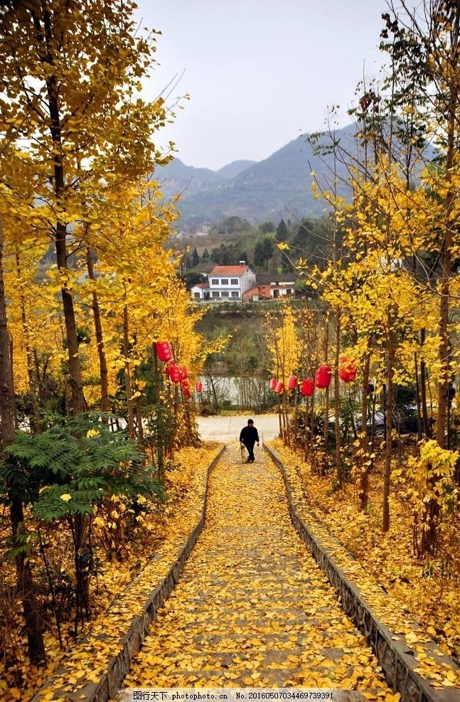 秋天 黄金 树叶 村庄 树木 摄影 自然景观 山水风景 300dpi jpg