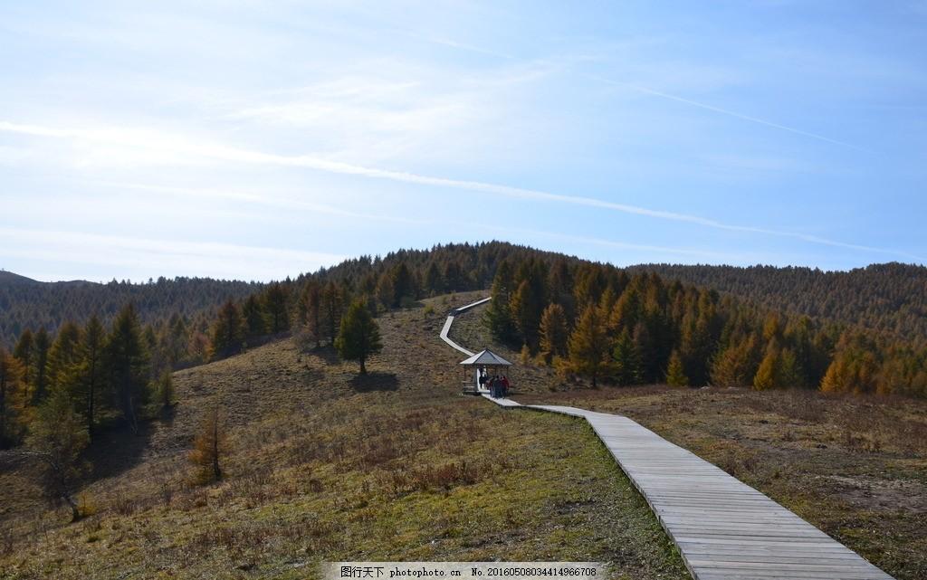 树林 山峦 秋天 落叶木 五台山 驼梁 五台山 摄影 自然景观 山水风景