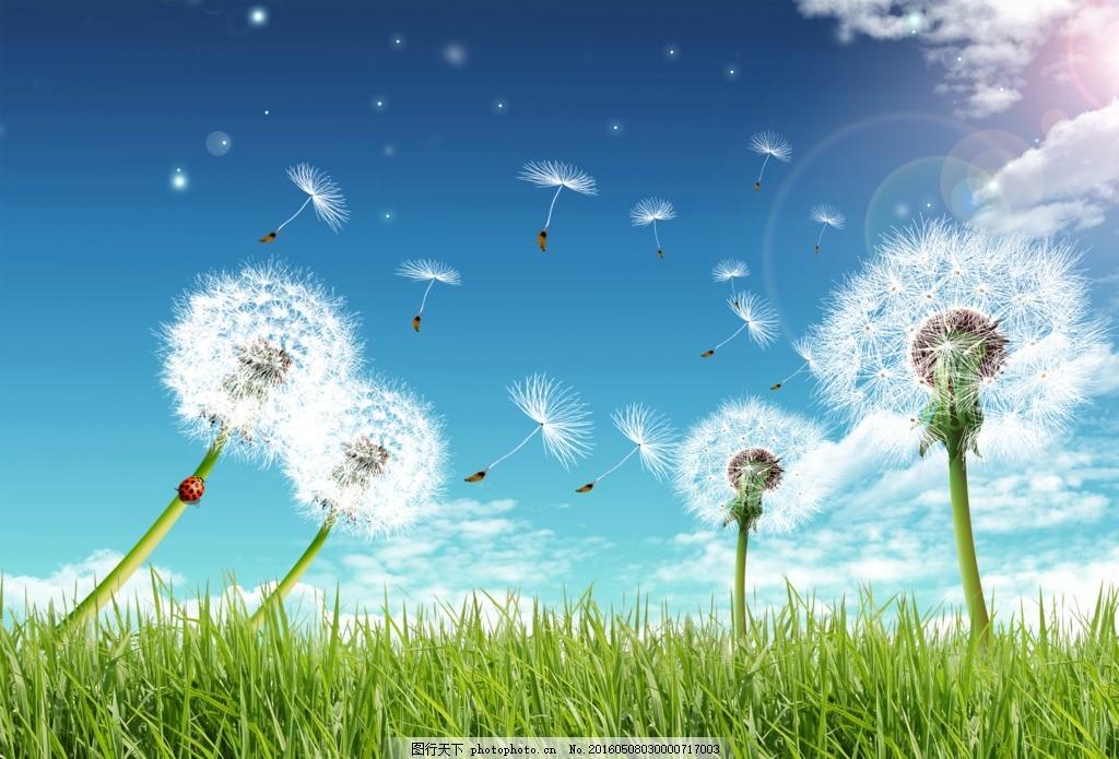 蒲公英 图片下载 唯美 放飞梦想 阳光 白云 未来 风景 天空