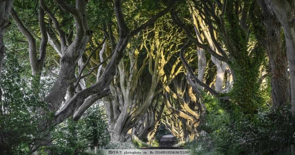 原始森林 树藤 树木 道路 小路 阳光 素材天下 摄影 自然景观 自然