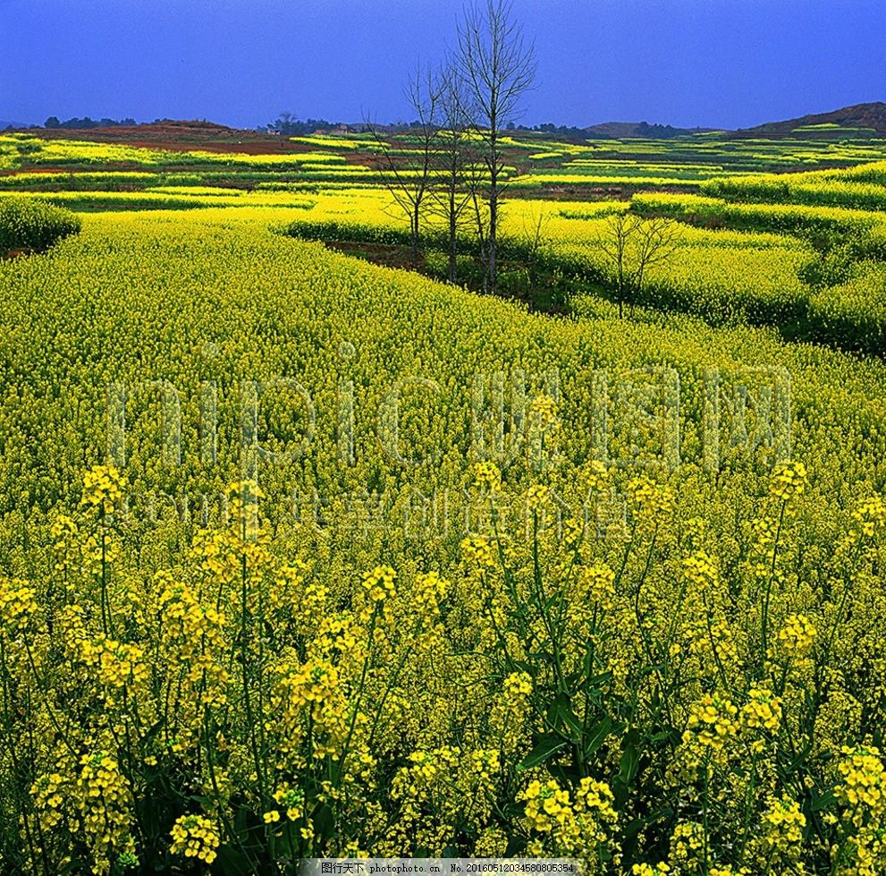 自然田园风景