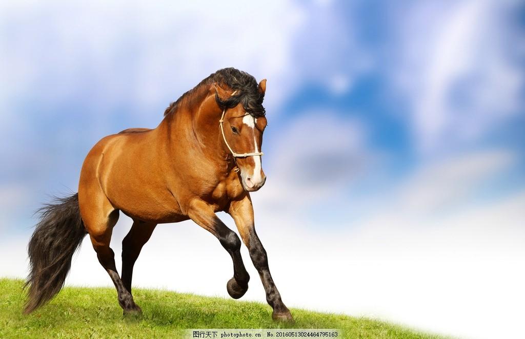 壁纸 动物 马 骑马 1024_662