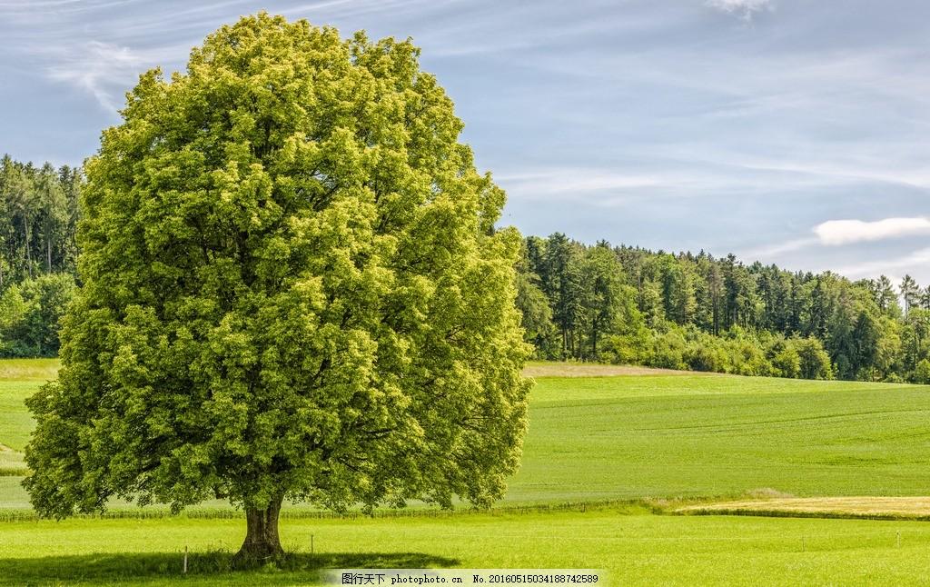 大树 草地 草原 公园 自然 田野 野外 绿树 森林 树林 美景