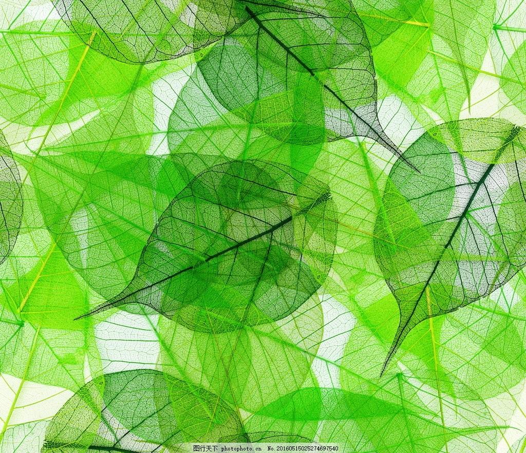 树叶 标本 绿色 纹理 叶脉 叶子 绿叶 背景 树枝树木树叶绿树图片
