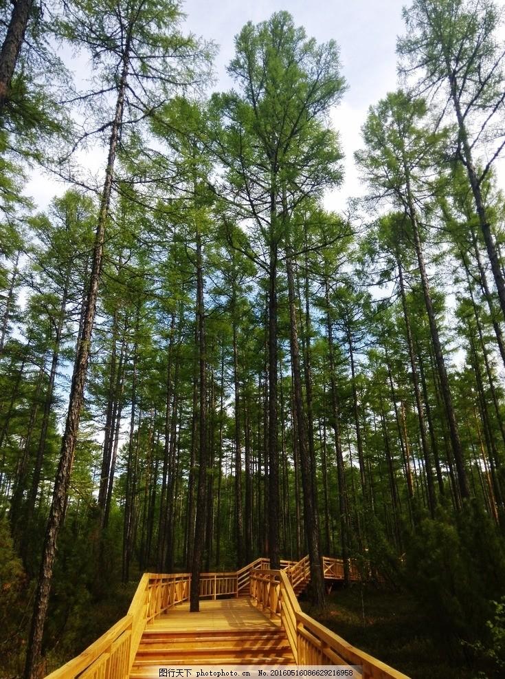木桥 森林 树木 小路 风景 风景图片 摄影 自然景观 自然风景 72dpi j