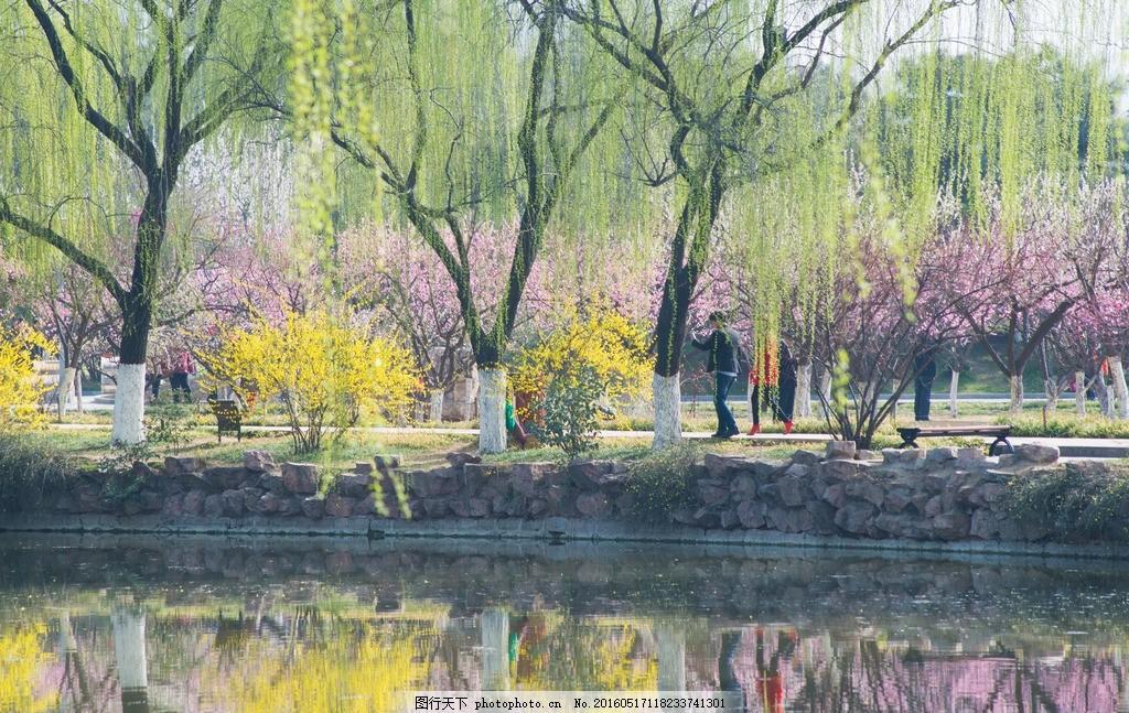 景色 春天来了 春暖花开 春 春季 花 水边 湖边 柳树 树木 摄影 自然