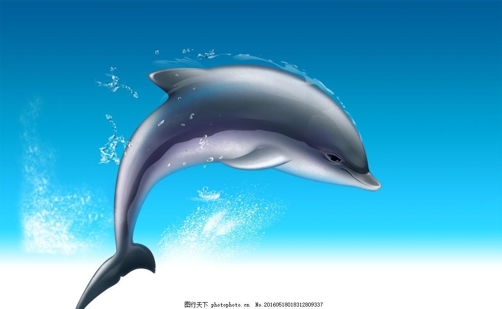 海豚 图片下载 卡通 动漫 动画 海洋生物 海洋动物 小海豚 鱼