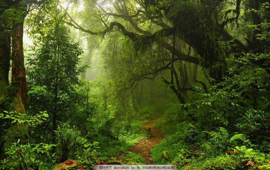 小路 绿色 丛林 原始森林 热带雨林 大树 树木 自然 树林 原生态 美丽