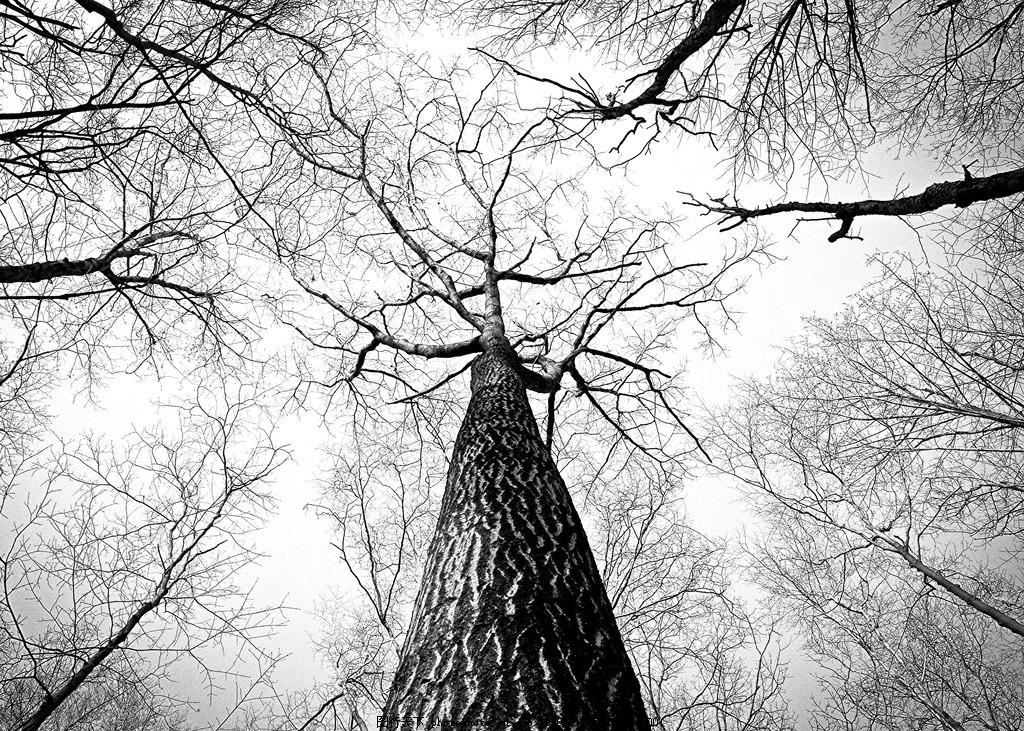 大树树干 大树 树干 参天大树 枝干 树枝 摄影图片 摄影 生物世界