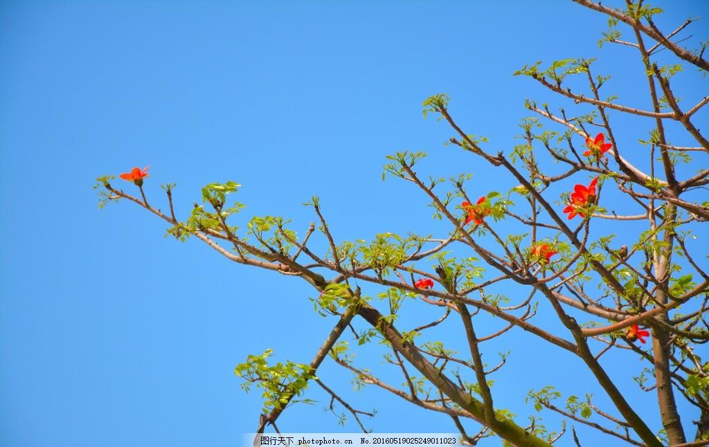 木棉 木棉花 春天 嫩芽 小花 发芽 木棉树 摄影 生物世界 树木树叶