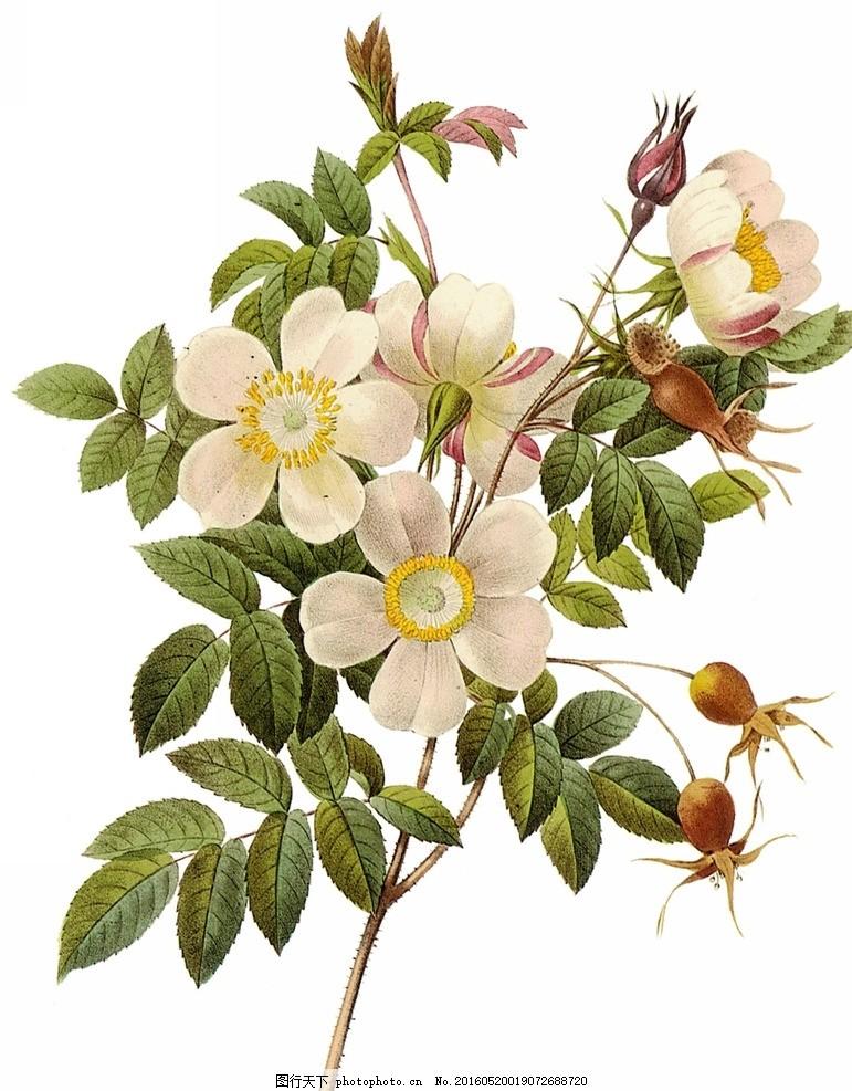 花 桃花 手绘桃花 绿色植物 植物 设计 文化艺术 绘画书法 72dpi jpg