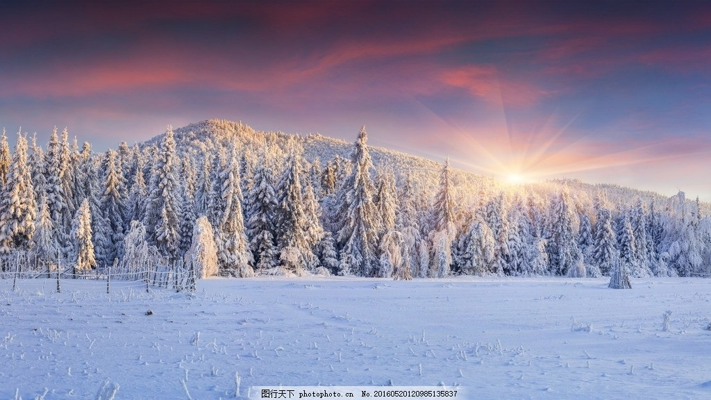 森林 阳光 冬天风景 冬天景色 雪松 冬季风景 冰天雪地 雪 雪景 美景
