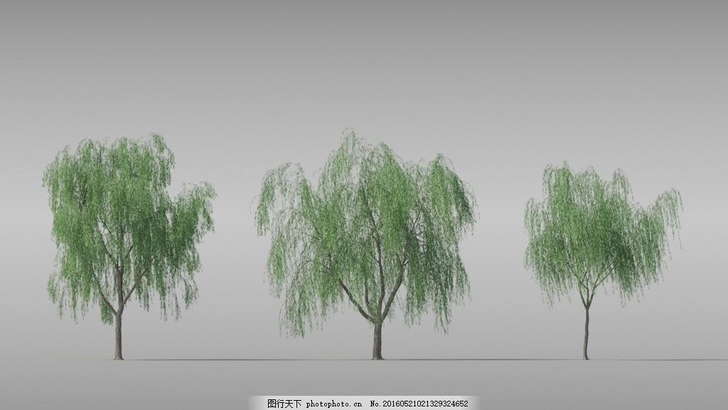 柳树 树木 树木模型 花 花模型 植物 植物模型 园林 景观植物 阔叶