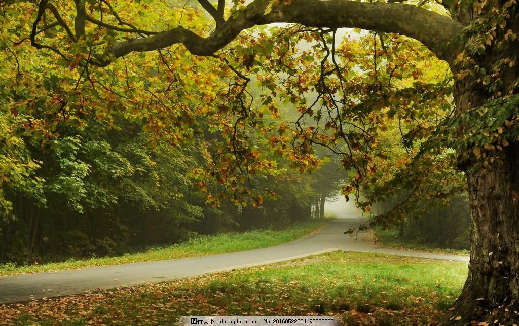 树林 自然 绿色 草地 公路 法桐 小路 道路 林荫路 林荫大道 森林
