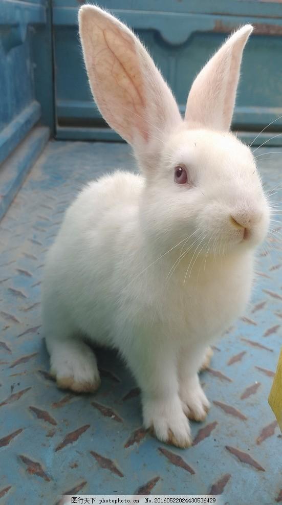 壁纸 动物 兔子 551_987 竖版 竖屏 手机