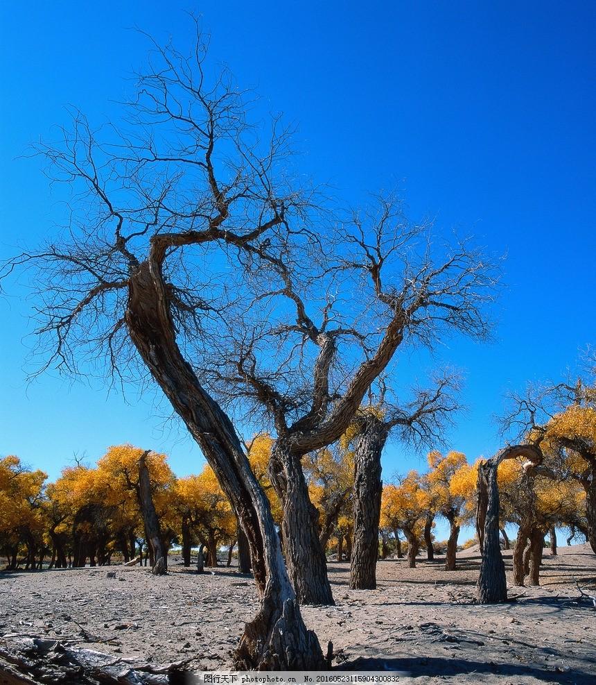 枯树 树木 荒野 树枝 森林 摄影 自然景观 自然风景