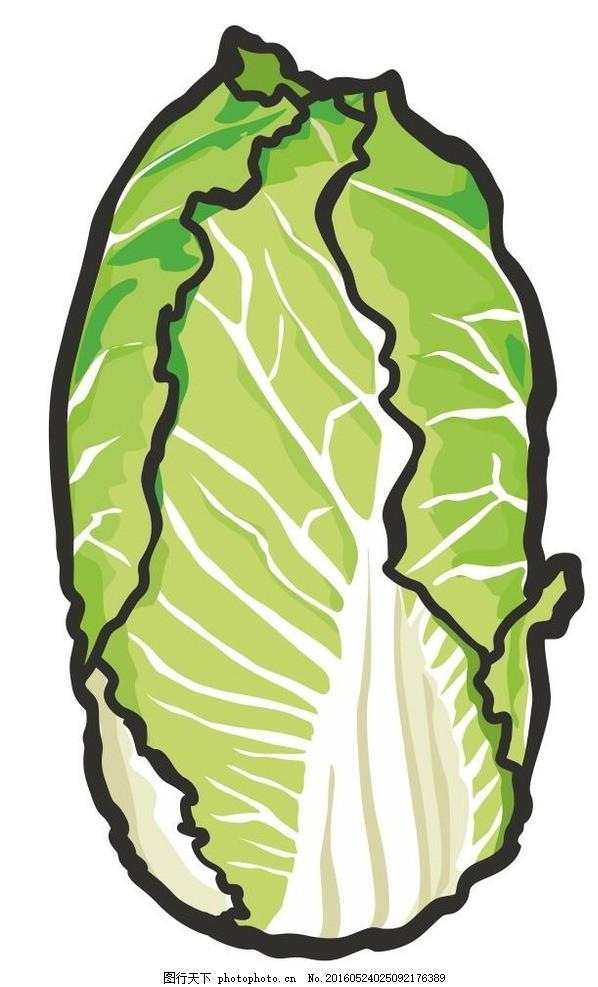 白菜 简笔画 线条 线描 简画 黑白画 卡通 手绘 标志图标 简单手绘画