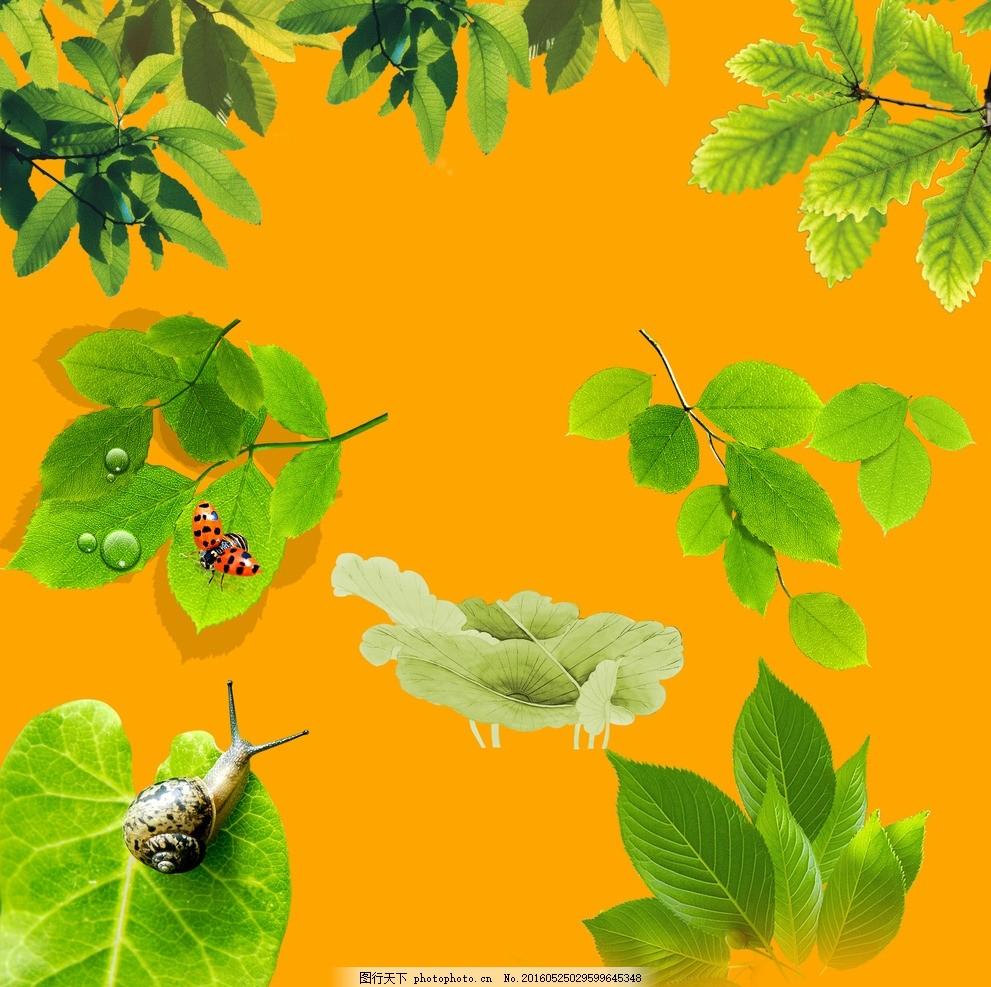 树叶素材图库 树叶 素材 psd 树枝 花边 花纹 设计 广告设计 广告设计