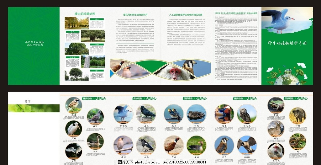 野生动物保护宣传册