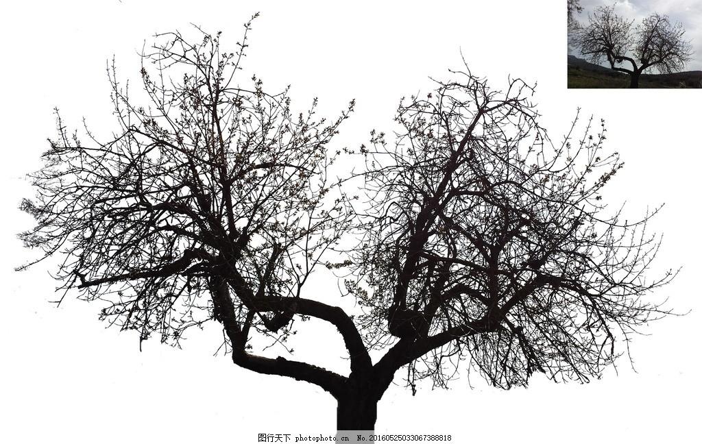 大树剪影 大树 树干 树枝 素材 剪影 设计 psd分层素材 psd分层素材