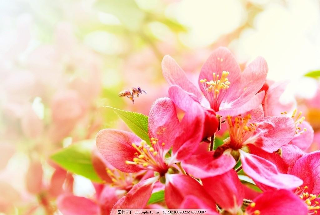 粉色花朵 摄影 素材 照片 景色 风景 自然风光 景物 唯美 花朵 彩色