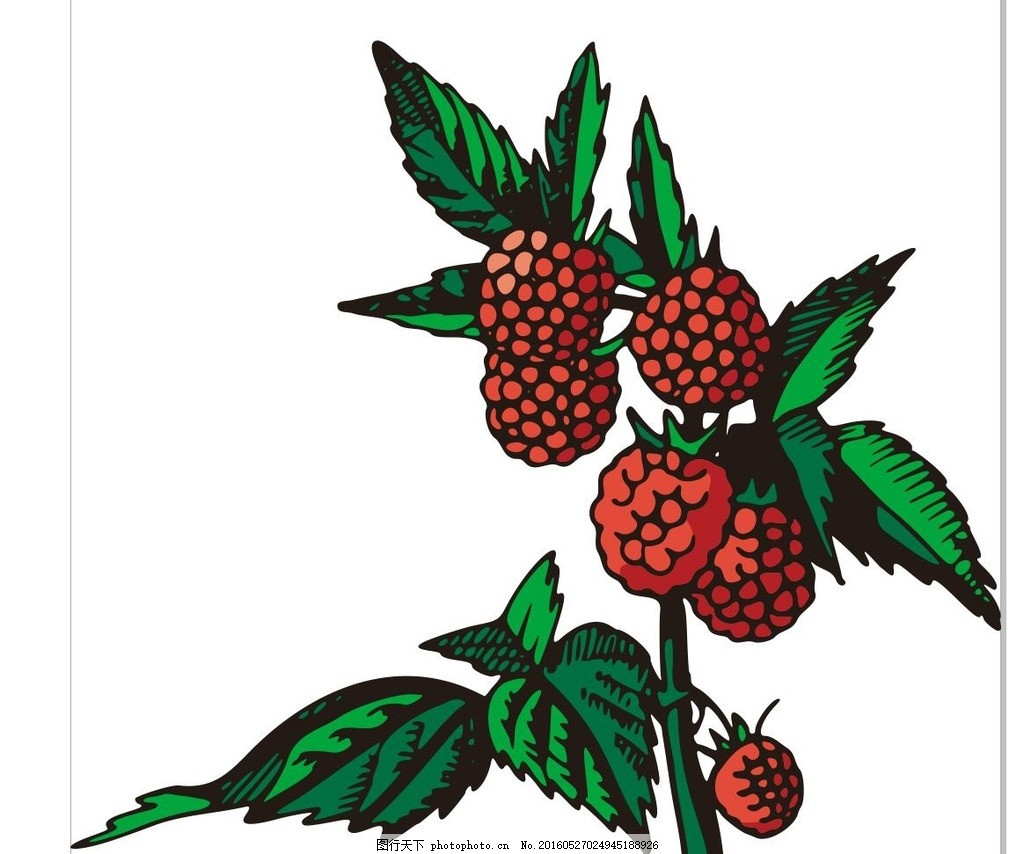 荔枝 彩绘水果 简笔画 线条 线描 简画 黑白画 卡通 手绘 标志图标