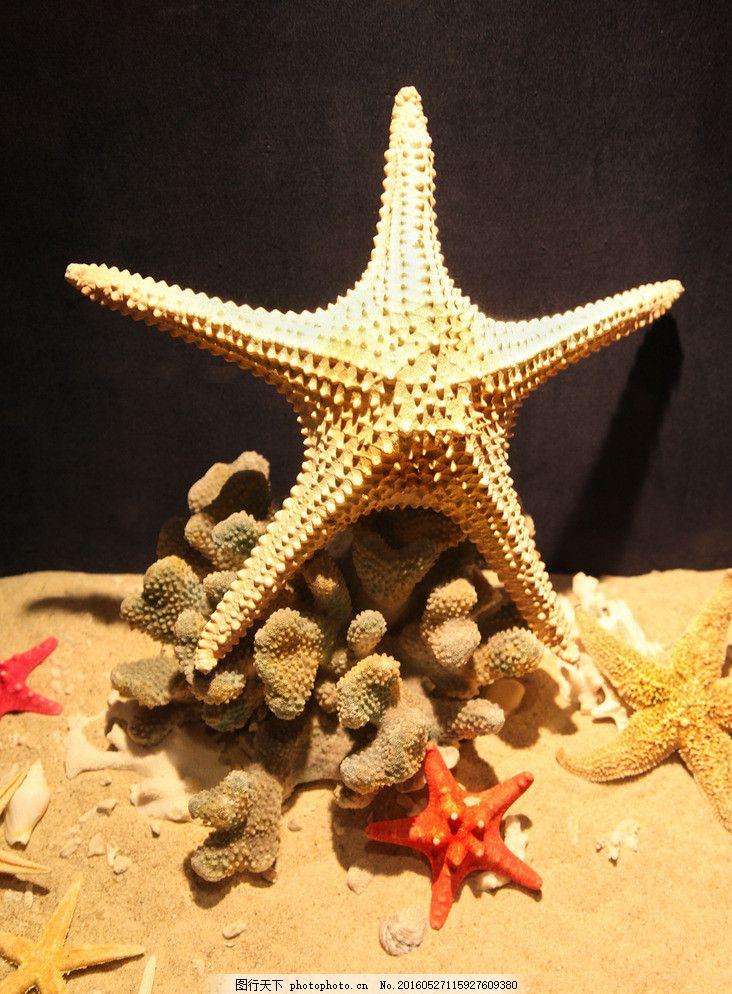 海星 工艺品 绘画 手工制作 标本 动物标本 贝壳 艺术图案 美术