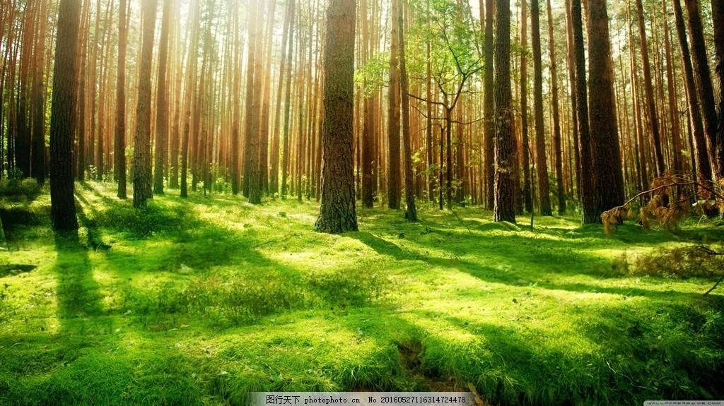 唯美森林风景 唯美森林风景高清图片下载 草 树木 春天 绿叶 落叶